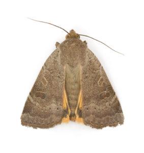 moth-photos